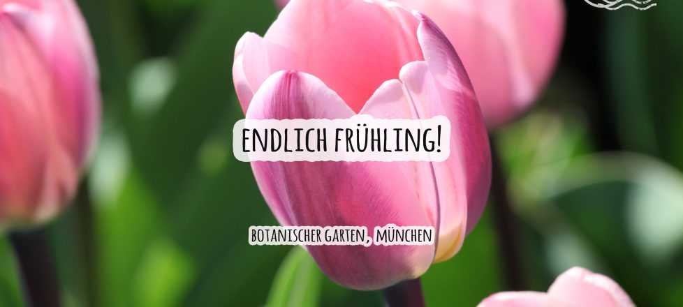Frühlingsgrüße aus dem Botanischen Garten, München